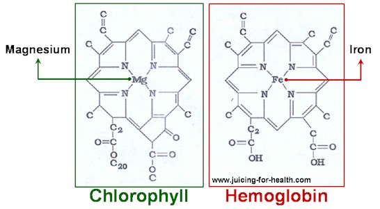 chlorophyll-hemoglobin
