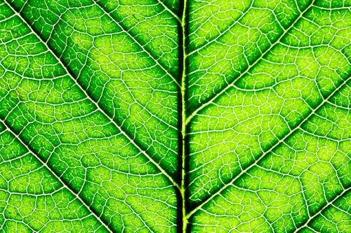Vegetable juicing - chlorophyll