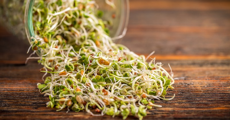 health benefits of alfalfa sprouts