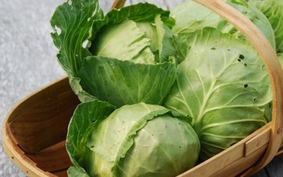 How To Use Cabbage For Healing Your Digestive System And Immunity