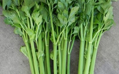 Celery Reduces Hypertension, Cleanses Kidneys, Relieves Arthritis And Gout Pains!