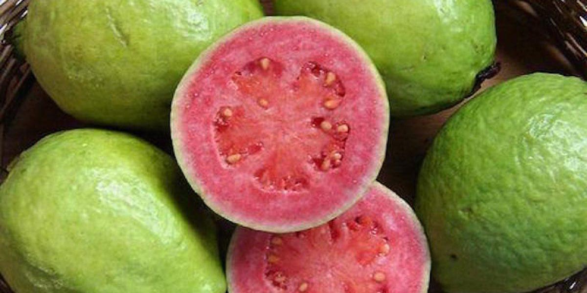Guava Contains 4x More Vitamin C Than An Average Orange