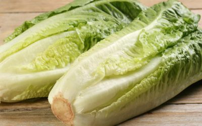 Lettuce Is An Excellent Food To Be Added For Juicing Or Eaten Raw