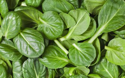 Important Reasons You Should Include Spinach In Your Diet