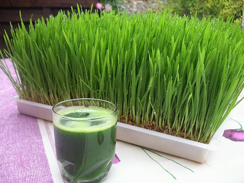 health benefits of wheatgrass juice