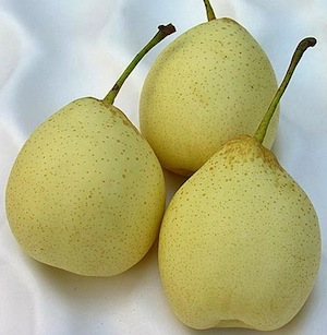 Fresh chinese pears ready to eat