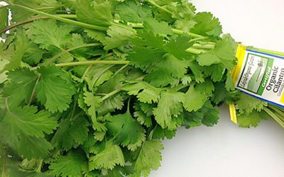 Cilantro Is Powerful For Preventing Alzheimer's, Lower Blood Sugar And Stop Insomnia