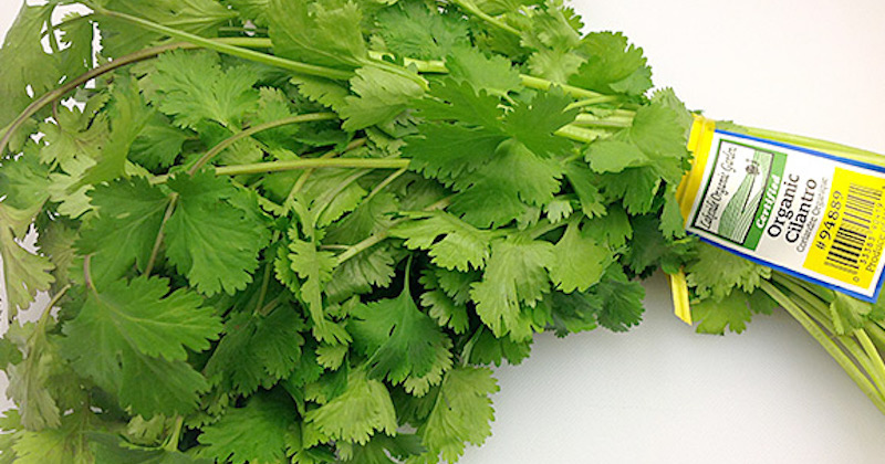 health benefits of cilantro