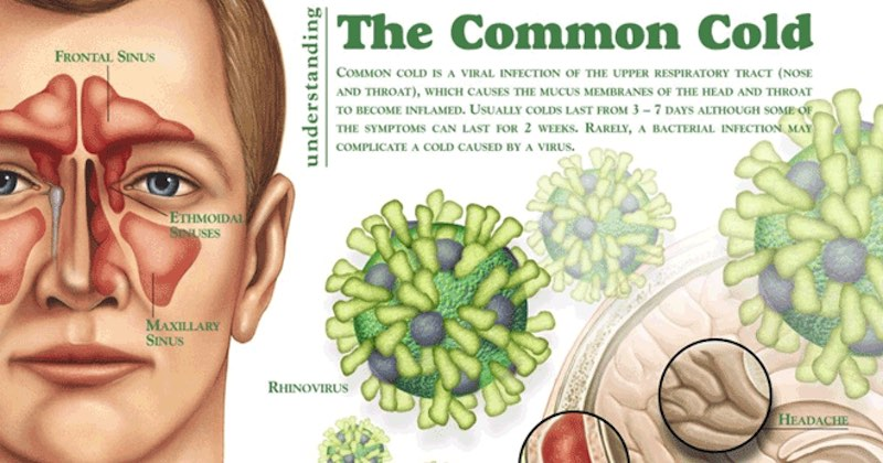Protect Yourself From The Common Cold With An Impenetrable