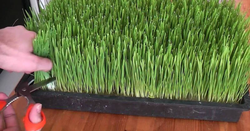 Step By Step Guide To Growing Sprouting Your Own