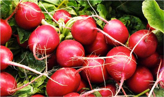 radish-new