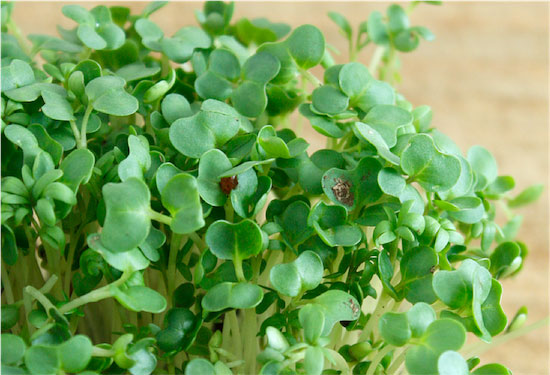 watercress - powerhouse fruits and vegetables list