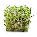 Healing vegetables - Alfalfa sprouts