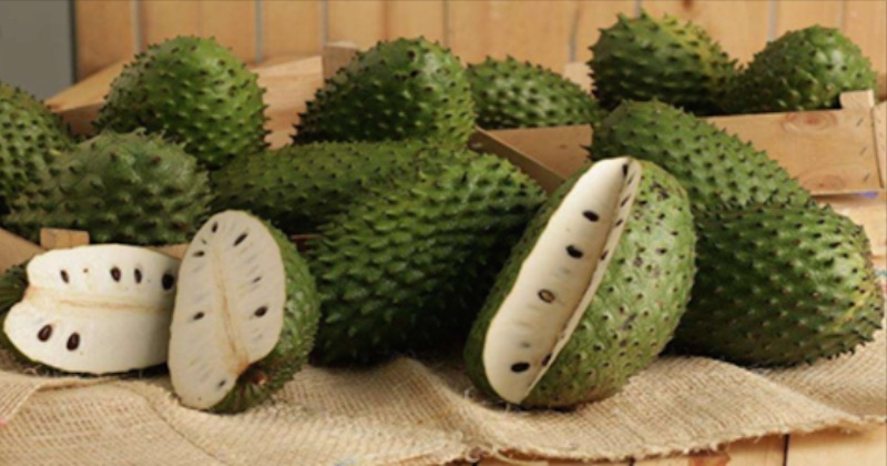 Health Benefits Of Soursop A K A Graviola Guyabano Or