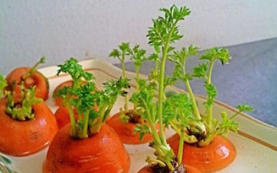 9 Foods You Can Buy Once And Regrow Forever!