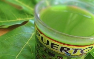 Study: Papaya Leaf Extract Slows Down Cancerous Tumor Growth