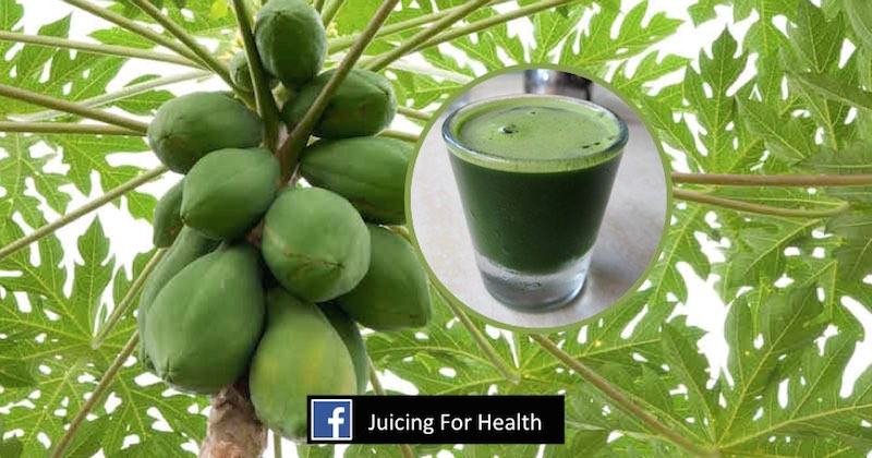 Papaya Leaf Juice How To Drink Papaya Leaf Juice To