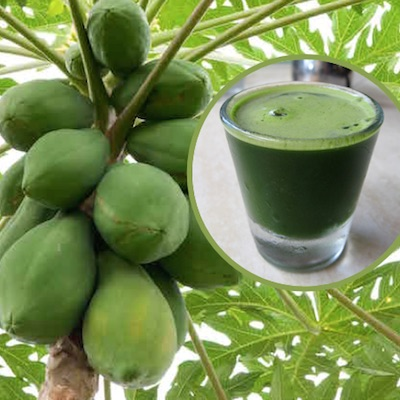 Papaya Leaf Juice For Increasing Blood Platelets And Fight Cancer