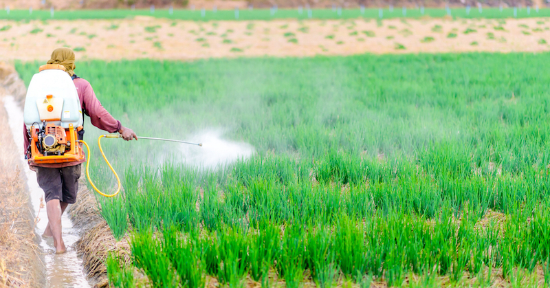 10 Sources of Endocrine Disruptors and How to Avoid Them - Juicing for Health