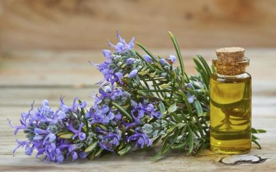 Scientists Discovered That Rosemary Essential Oil Boosts Your Memory Retention By Up To 75%