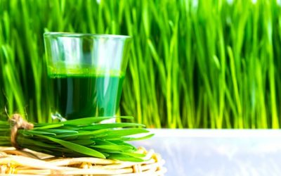 How To Grow Wheatgrass At Home For Your Endless Juicing Supply