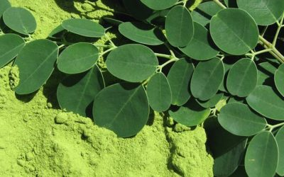 Moringa Oleifera: The Superfood That Kills 5 Types Of Cancer And Stops Diabetes!