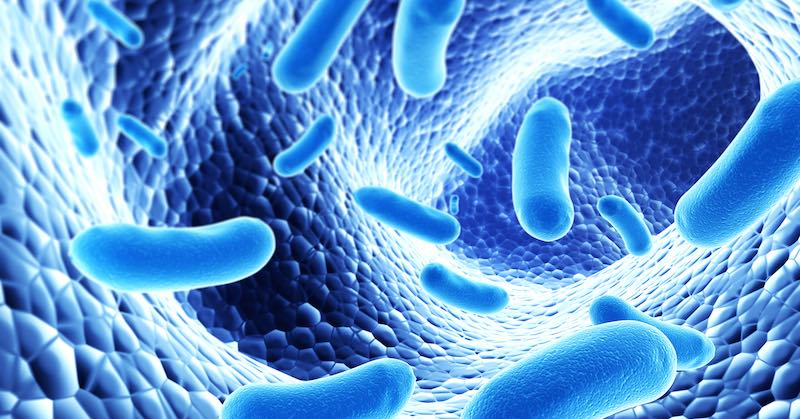 compromised gut flora leads to adhd
