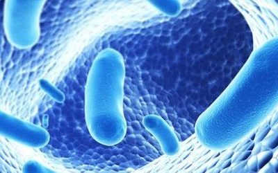 Compromised Gut Flora Leads To ADHD, Autism And Learning Disabilities