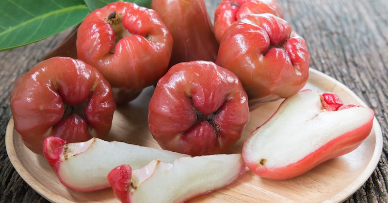 Rose apple juice detoxifies the liver stops diabetes