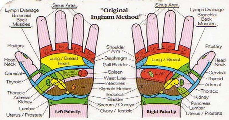 Foods Spleen Health