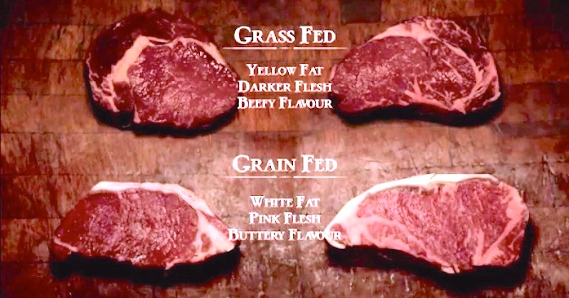 grass and grain-fed beef