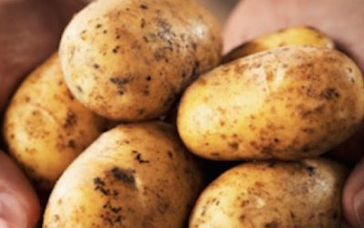 Conventional Potatoes Are Grown With 31 Cancer-Causing Toxins From Pesticides