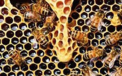 62% Of Honey Tested Contain Glyphosate, An Ingredient In Roundup Herbicide