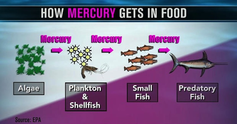 mercury contaminated fish In fact, mercury is responsible for over three quarters of all contaminated fish- consumption advisories an international team of researchers that.