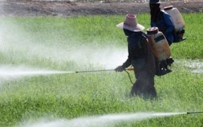 Monsanto's DDT Pesticide Could Raise Breast Cancer Risk In Next Generation