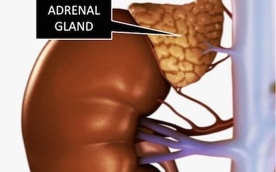 A Simple Eye Test To Tell If Your Adrenals Are Fatigued And What You Can Do
