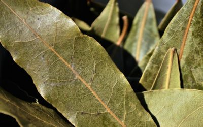 Burn A Few Dried Bay Leaves In Your Home And Feel An Immediate Change To The Atmosphere