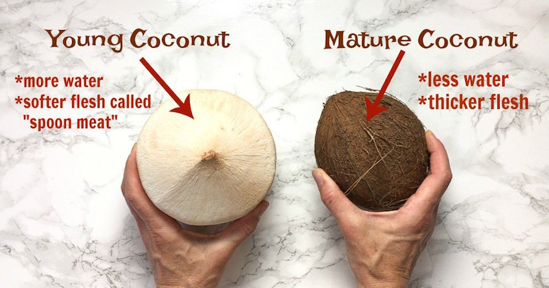 Image result for young coconut old coconut