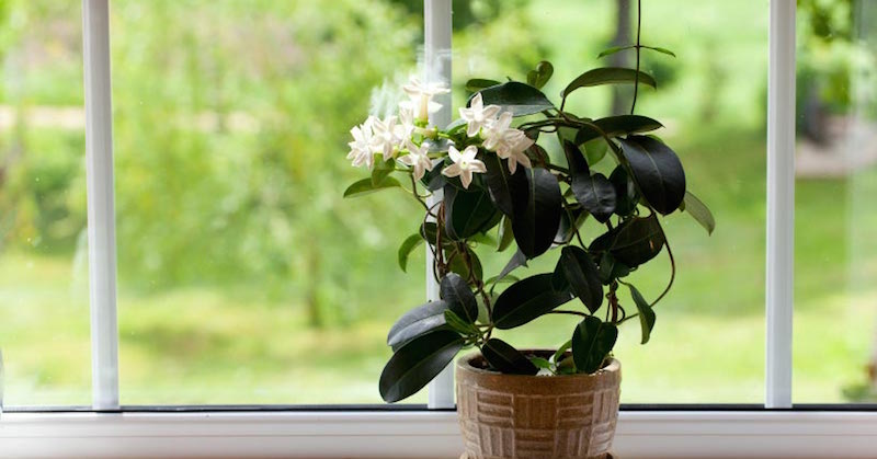 plants to improve sleep and air quality