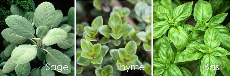 sage, thyme, basil