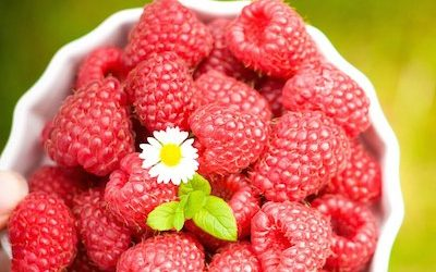 All You Need to Know About Raspberries and their Amazing Health Benefits