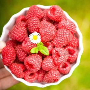 A bowl of fresh organic raspberries