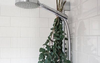 Wonderful Things That Happen When You Hang Eucalyptus In Your Shower