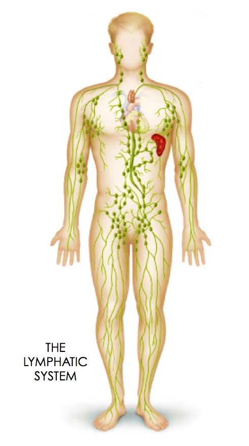 Drain Your Lymphatic Fluids - How To Do A 3-Day Lymphatic Detox