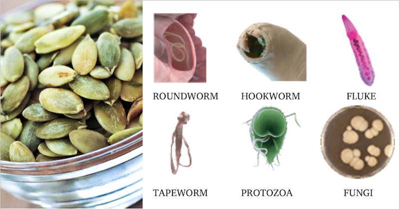 Pumpkin Seeds Kill Parasites And Intestinal Worms