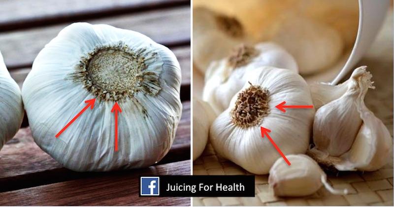 spot china garlic