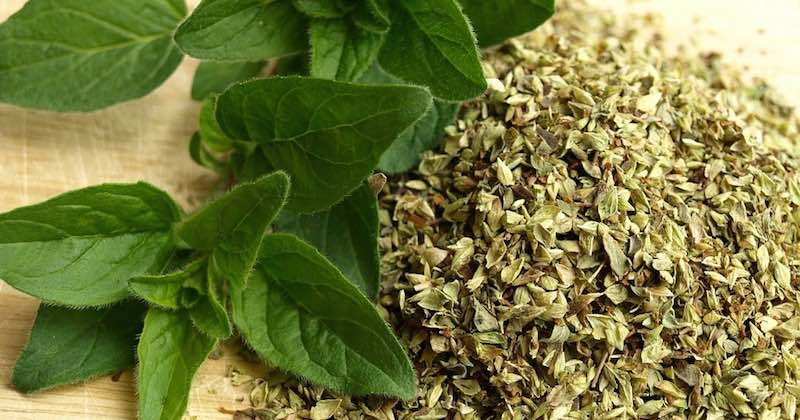 oregano tea for healing