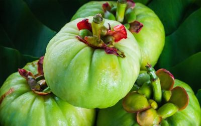 Garcinia Cambogia: The Miracle Weight Loss Fruit?