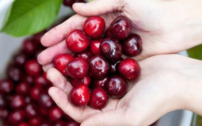 Eat Cherries To Help Reduce Gout Attacks And Arthritis Inflammation