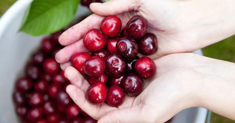 Eat cherries reduce gout attacks